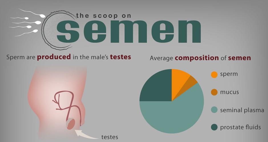 Fact nutritional sperm